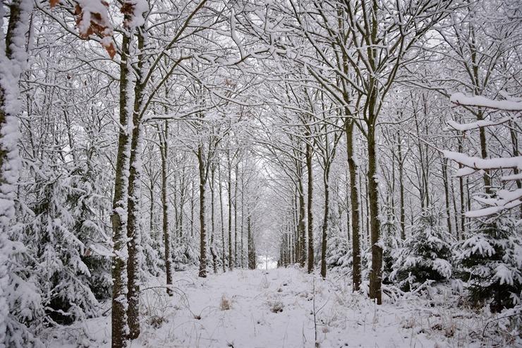 Kad Latgales pilsētu Ludzu pārklāj sniegs 296605