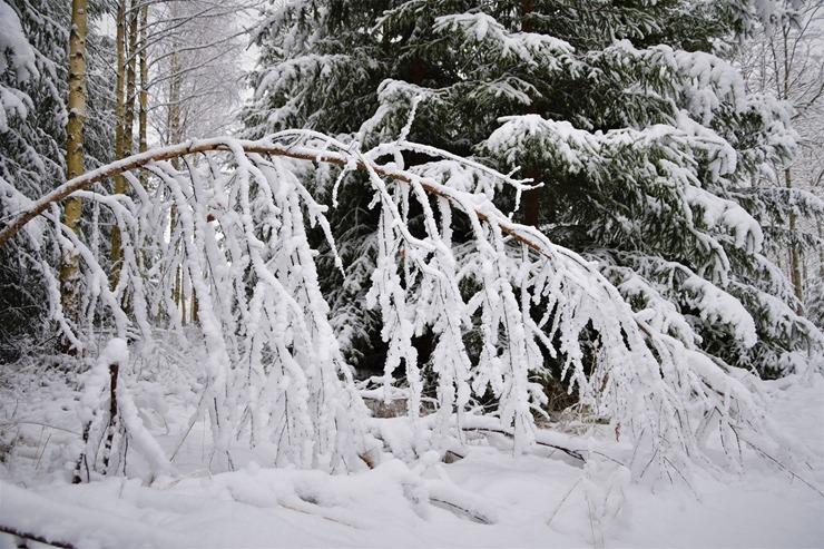 Kad Latgales pilsētu Ludzu pārklāj sniegs 296607