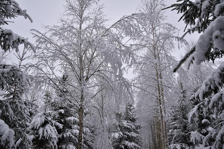 Kad Latgales pilsētu Ludzu pārklāj sniegs 296608