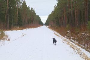 Travelnews.lv dodas 37 km pārgājienā Dundagas apkārtnē 3.daļa 26
