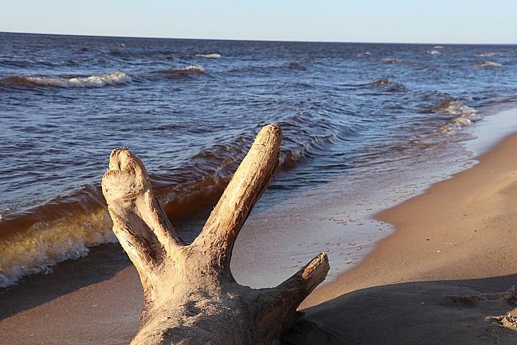 Mākslinieku dvēselēm šobrīd ir jādodas uz Carnikavas pludmali 299291