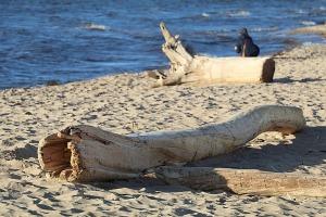 Mākslinieku dvēselēm šobrīd ir jādodas uz Carnikavas pludmali 16