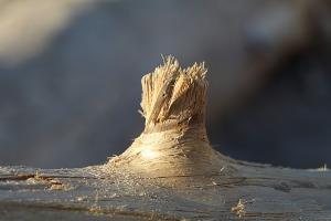 Mākslinieku dvēselēm šobrīd ir jādodas uz Carnikavas pludmali 22