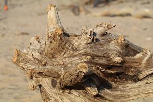 Mākslinieku dvēselēm šobrīd ir jādodas uz Carnikavas pludmali 23