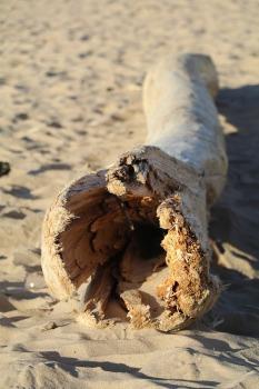 Mākslinieku dvēselēm šobrīd ir jādodas uz Carnikavas pludmali 24