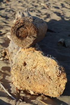Mākslinieku dvēselēm šobrīd ir jādodas uz Carnikavas pludmali 30