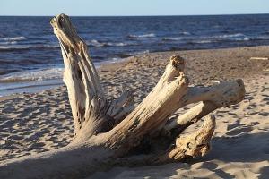 Mākslinieku dvēselēm šobrīd ir jādodas uz Carnikavas pludmali 34