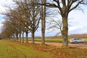 Travelnews.lv dodas 27 km pārgājienā Skrīveru novadā, kur dzīvo Andreja Upīša varoņi 31