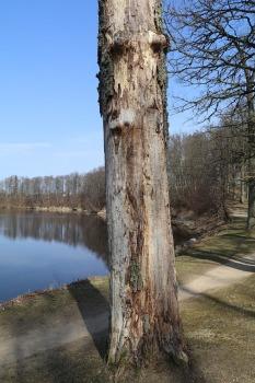 Kokneses parks starp Pērses un Daugavas krastiem ir burvīga atpūtas un pastaigu vieta 15