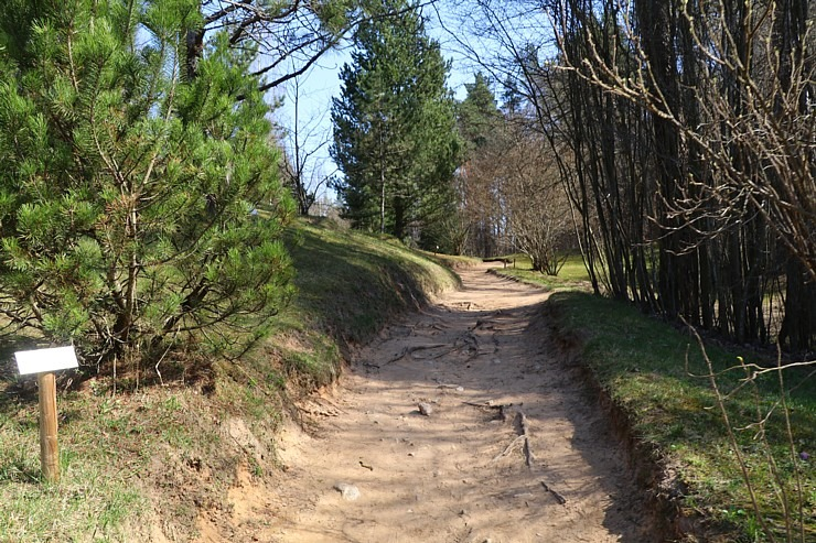 Travelnews.lv apmeklē dendroloģisko Špakovska parku Ogrē 300185