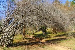 Travelnews.lv apmeklē dendroloģisko Špakovska parku Ogrē 10