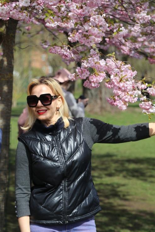 Sakuras krāšņi zied Uzvaras parkā Pārdaugavā 300506