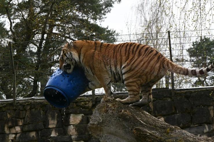 photo: Ieskaties, kā Rīgas Zooloģiskajā dārzā iemītnieki gatavojas vasarai