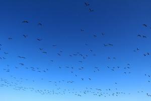 Travelnews.lv apmeklē Limbažu Lielezera dabas taku 35