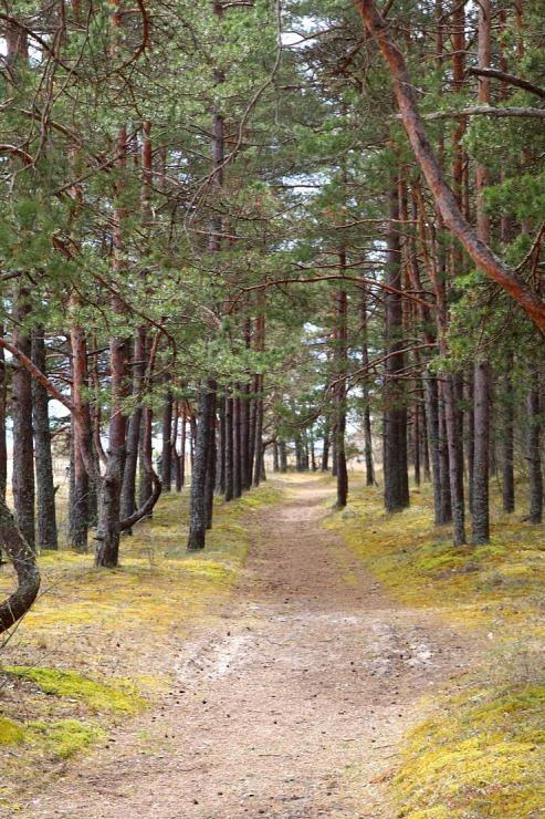 Travelnews.lv dodas 20 km pārgājienā gar Rīgas līča krastu Engures pusē 300894