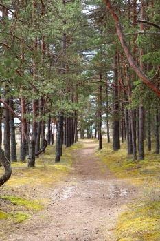 Travelnews.lv dodas 20 km pārgājienā gar Rīgas līča krastu Engures pusē 34