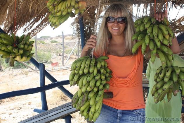 Turpat tiek pārdoti banāni...tikko kā no koka norauti...