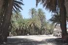 Palmu ielokā... 11