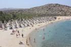 Vai pludmale ir arī slavena ar to, ka tajā aug lielākā palmu audzētava Eiropā un vienīgā audzētava, kurā ir Phoenix Theophrastii palmas 12