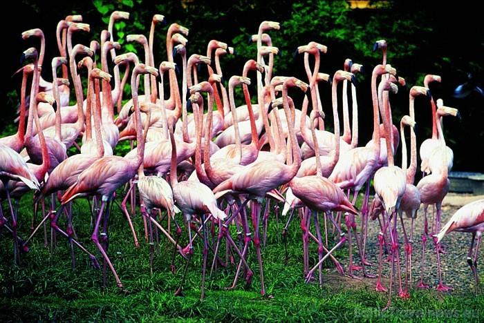 Foto autortiesības pieder Dominikānas Republikas tūrisma centrālei Foto: GoDominicanRepublic.com
