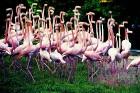 Foto autortiesības pieder Dominikānas Republikas tūrisma centrālei Foto: GoDominicanRepublic.com 19