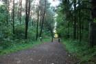 No turienes pa meža ceļu var doties uz jūru 11