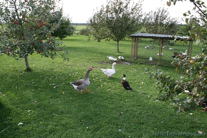 Plašā ābeļdārzā mīt putni