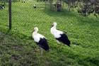 Rīgas zooloģiskā dārza lauku filiāle Cīruļi atrodas Kalvenē, 55 kilometru attālumā no Liepājas 1