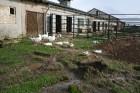 Zoo aplūkojami 12 sugu un visdažādāko šķirņu mājdzīvnieki 5