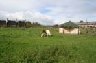 Cīruļos apskatāmas lamas, kazas, kiangi, brieži, vilki, govis, zosis, tītari, dažādi putni un daudzi citi dzīvnieki 15