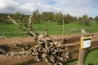 Cīruļu zoodārzs izceļas ar plašajām teritorijām un iespēju dzīvniekus apskatīt pēc iespējas dabiskākā vidē 18