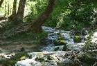 Parka bagātība ir plašais floras un faunas klāsts: 1267 augu sugas, ta skaitā 75, kuras aug tikai Plitvices ezeros, ka arī 55 orhideju sugas un 321 ta 27