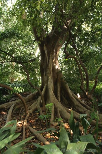 Malagas botāniskais dārzs www.andalucia.org