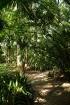 Malagas botāniskais dārzs www.andalucia.org 6