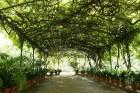 Malagas botāniskais dārzs www.andalucia.org 18