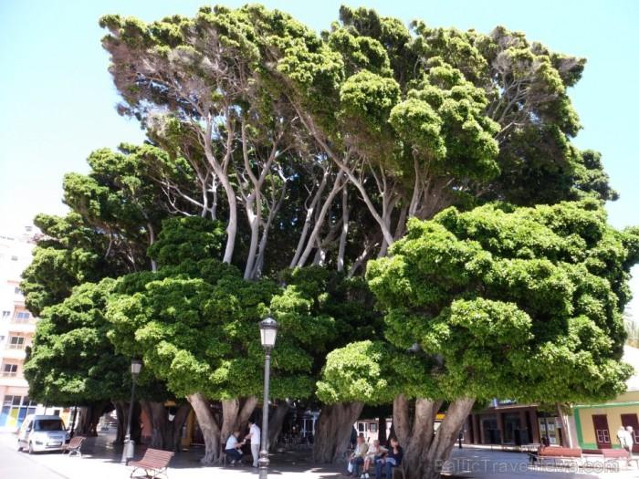 Autors: Ērika Segliņa, Tenerife, 2011 g.www.teztour.lv 70042