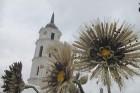 Viļņas amatniecības gadatirgus «Kaziukas 2012» - www.vilnius-tourism.lt 57