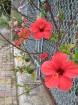 Kalabrija ir brīnumains reģions Itālijas dienvidos, kas palīdz atgūt fizisko un garīgo spēku, pieskarties vēsturei, atklāt neskartās dabas skaistumu u 59