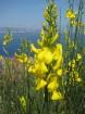 Kalabrija ir brīnumains reģions Itālijas dienvidos, kas palīdz atgūt fizisko un garīgo spēku, pieskarties vēsturei, atklāt neskartās dabas skaistumu u 63
