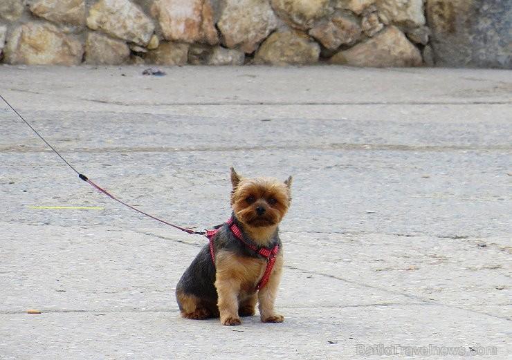 Atklāj Spānijas pilsētu Taragonu - populāro Katalonijas tūrisma galamērķi