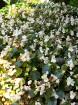 Svētās Klotildes dārzi Katalonijā apbur un vieno ar dabu www.lloretdemar.org 20