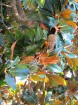 Svētās Klotildes dārzi Katalonijā apbur un vieno ar dabu www.lloretdemar.org 28