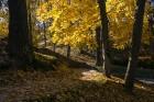 Cēsis ir brīnišķīga pilsēta zelta rudens baudīšanai 44
