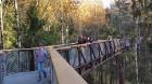 Travelnews.lv sadarbībā ar autonomu Sixt.lv iepazīst Lietuvas koku galotņu taku, kas atrodas 60 km no Paņevežas jeb 10 km no Anīkščai 10