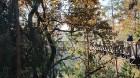 Travelnews.lv sadarbībā ar autonomu Sixt.lv iepazīst Lietuvas koku galotņu taku, kas atrodas 60 km no Paņevežas jeb 10 km no Anīkščai 11