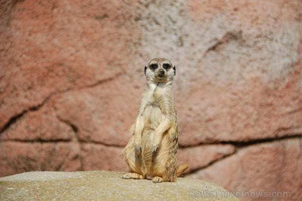Eksotiska daba un fascinējoši dzīvnieki - iepazīsti Dienvidāfrikas Republiku