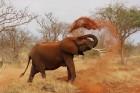 Eksotiska daba un fascinējoši dzīvnieki - iepazīsti Dienvidāfrikas Republiku 3