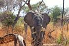 Eksotiska daba un fascinējoši dzīvnieki - iepazīsti Dienvidāfrikas Republiku 4