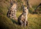 Eksotiska daba un fascinējoši dzīvnieki - iepazīsti Dienvidāfrikas Republiku 5