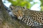 Eksotiska daba un fascinējoši dzīvnieki - iepazīsti Dienvidāfrikas Republiku 8